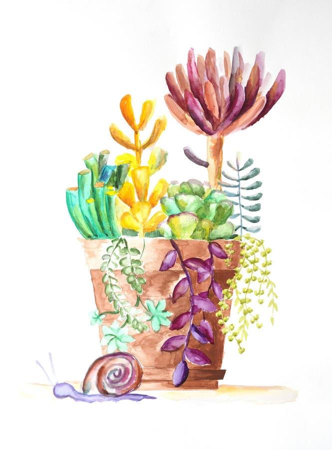 Ejemplo de la acuarela de succulents stock de ilustración