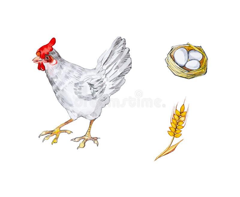 Ejemplo de la acuarela de un pollo, huevo del pollo en una cesta y un oído del trigo Aislado en el fondo blanco stock de ilustración