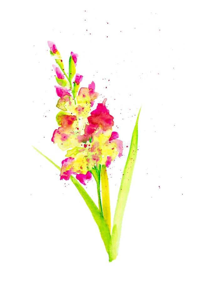 Ejemplo de la acuarela de una flor hermosa del gladiolo rodeada por descensos abstractos del polen Aislado en el fondo blanco ilustración del vector