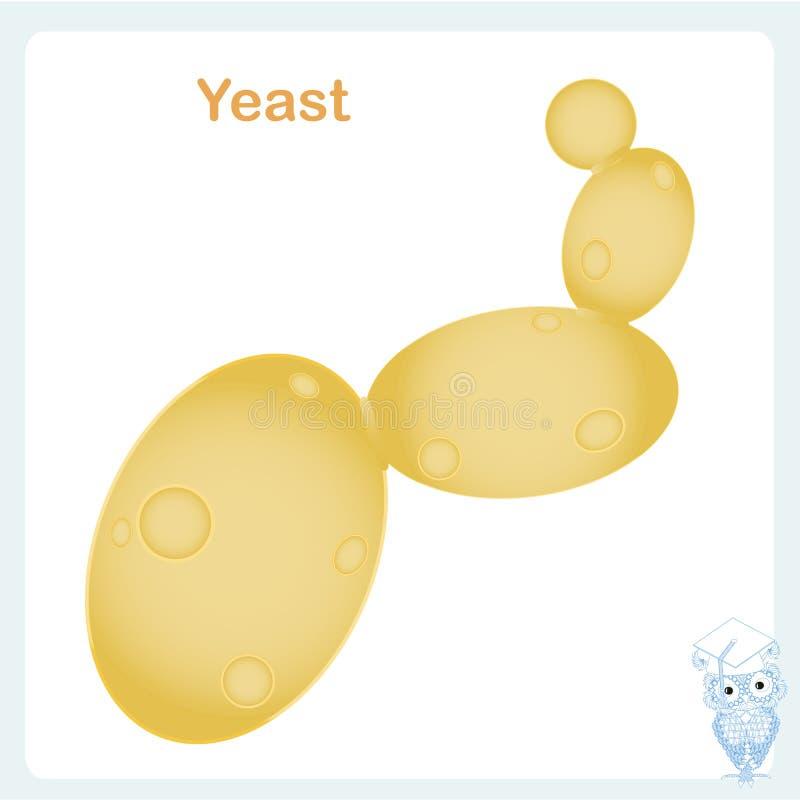 Ejemplo de la célula de levadura Ingrediente alimentario del ejemplo común del vector, para la educación biológica, ilustración del vector