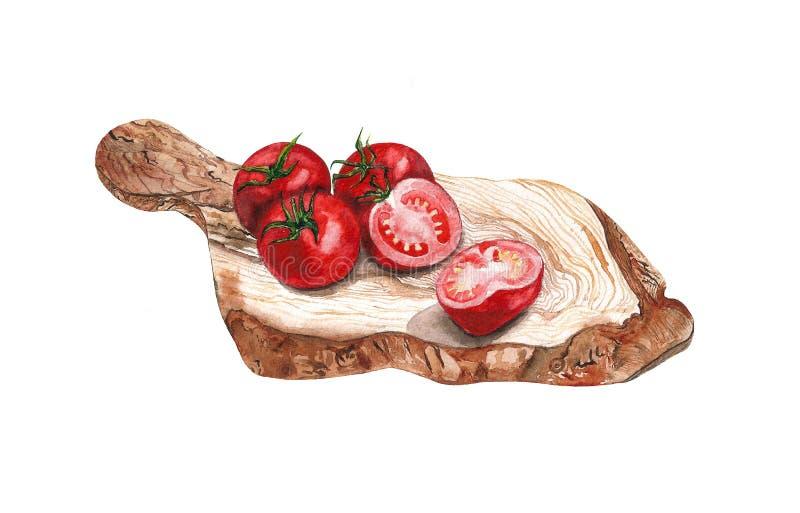 Ejemplo de la comida de la acuarela de los tomates ilustración del vector