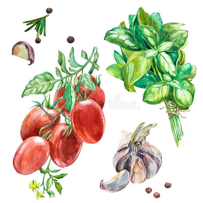 Ejemplo de la comida de la sopa de la calabaza moscada de la acuarela aislado en el fondo blanco con las verduras tomate, cebolla ilustración del vector