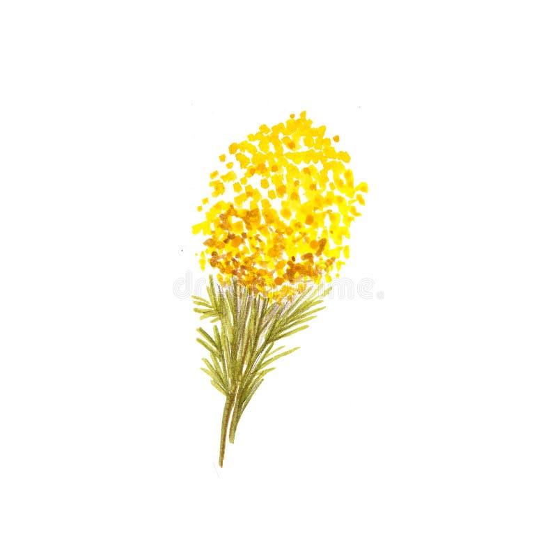 Ejemplo de la flor de la acuarela Ejemplo del drenaje de la mano ilustración del vector