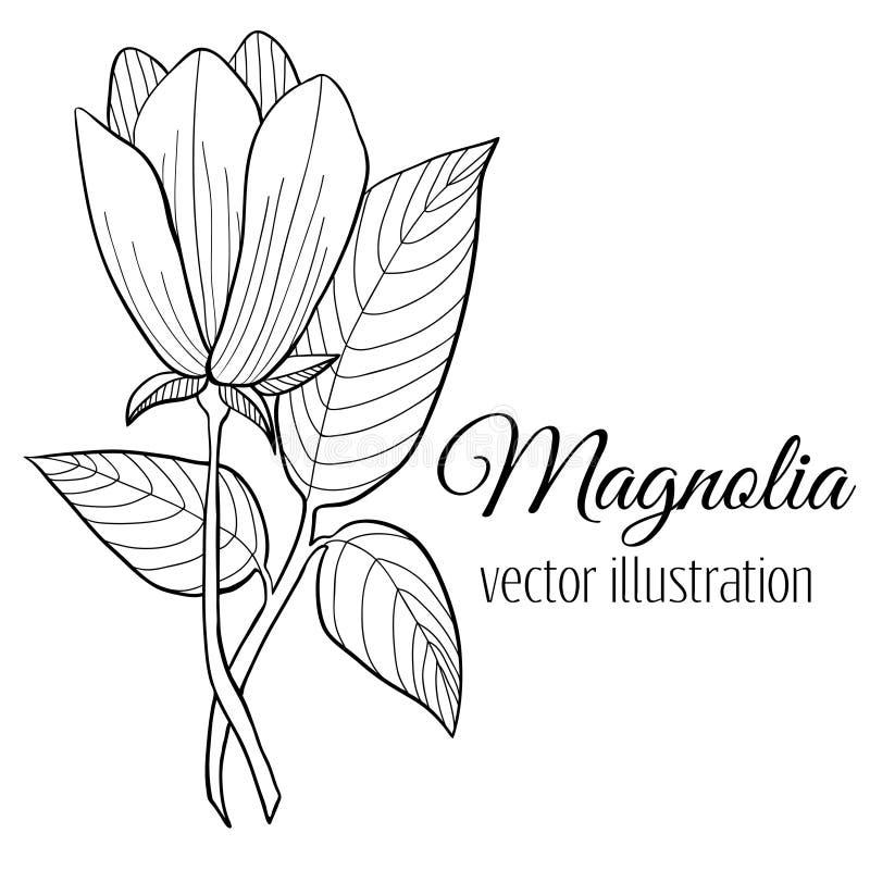 Ejemplo de la flor de la magnolia ilustración del vector