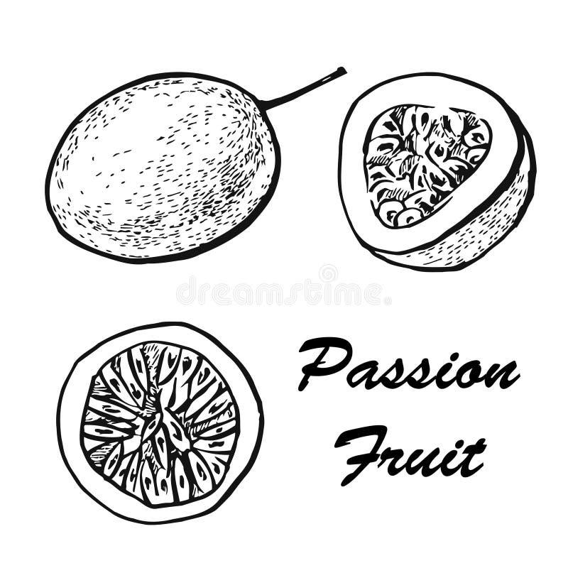 Ejemplo de la fruta de la pasión Dibujos exóticos de la fruta tropical aislados en el fondo blanco Ejemplo bot?nico de fotografía de archivo libre de regalías