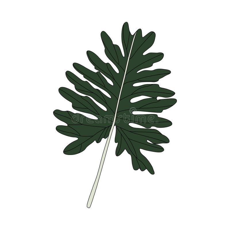 Ejemplo de la hoja de Xanadu del Philodendron stock de ilustración