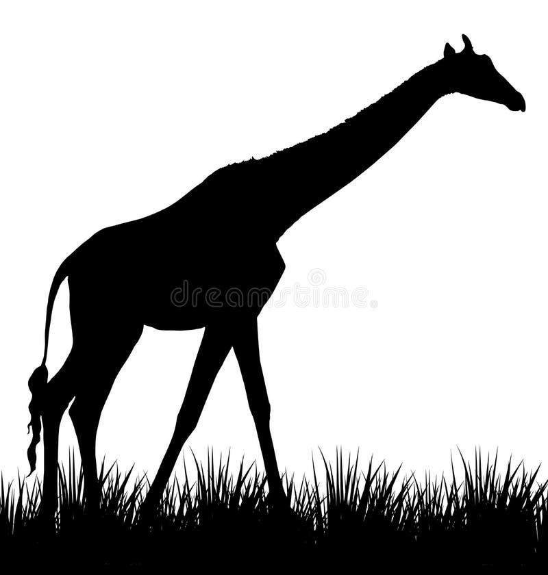 Ejemplo de la jirafa stock de ilustración