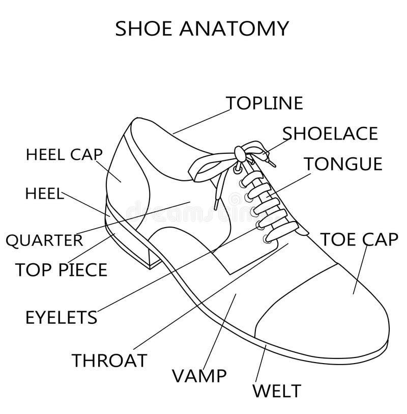 Ejemplo de la moda - ejemplo de la trama de la anatomía de un zapato ilustración del vector