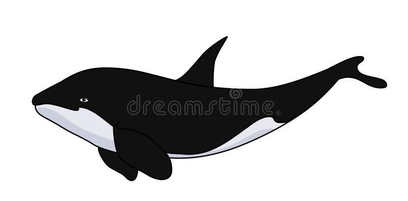 Ejemplo de la orca de la orca Imagen de la acción de la ballena stock de ilustración