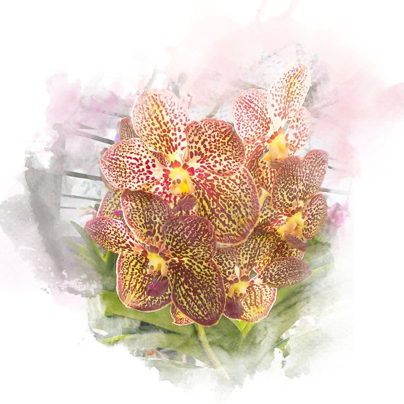 Ejemplo de la orquídea hermosa del flor stock de ilustración