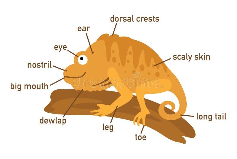Ejemplo de la pieza del vocabulario de la iguana del cuerpo ilustración del vector
