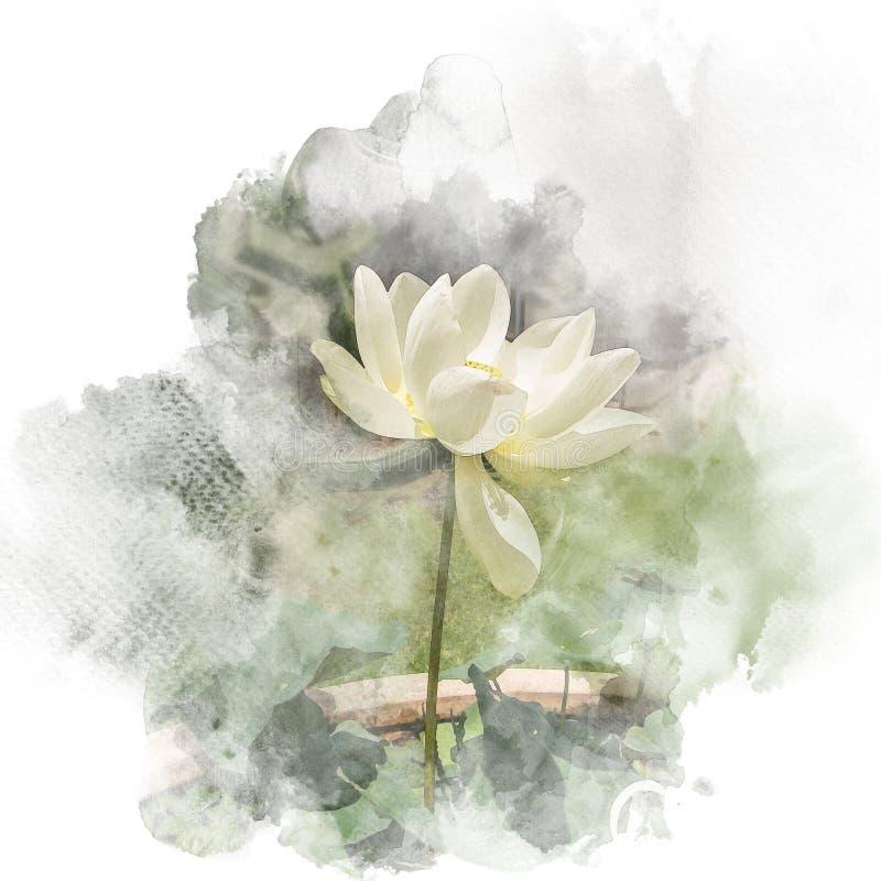 Ejemplo de la pintura de la acuarela del loto del flor ilustración del vector