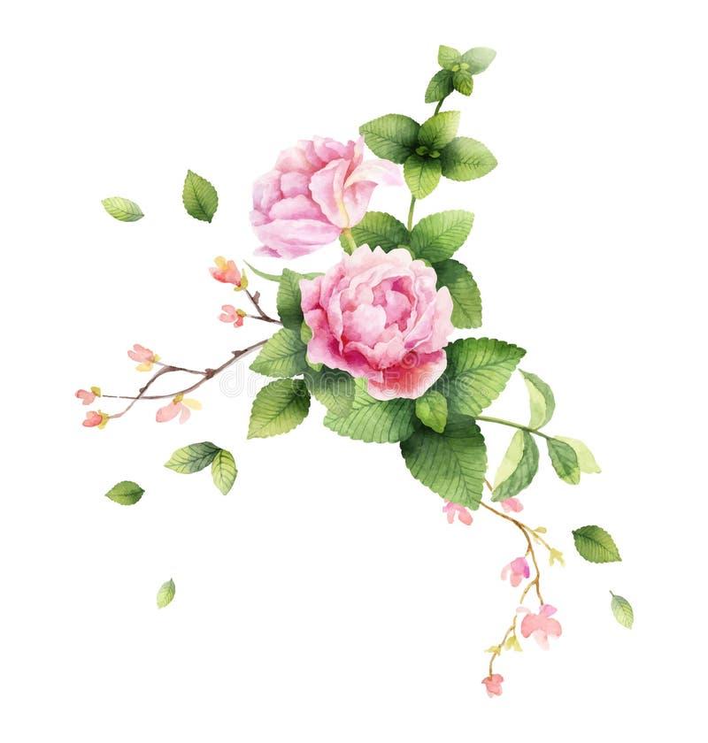 Ejemplo de la pintura de la mano del vector de la acuarela de las flores de la peon?a y de las hojas de menta verdes libre illustration