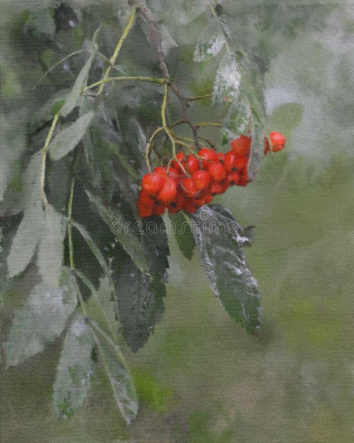 Ejemplo de la rama de la ceniza de montaña con las bayas rojas en técnica de la acuarela fotos de archivo