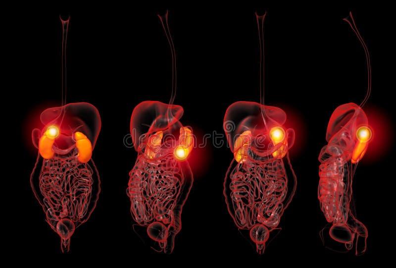ejemplo de la representación 3D del dolor de los riñones ilustración del vector