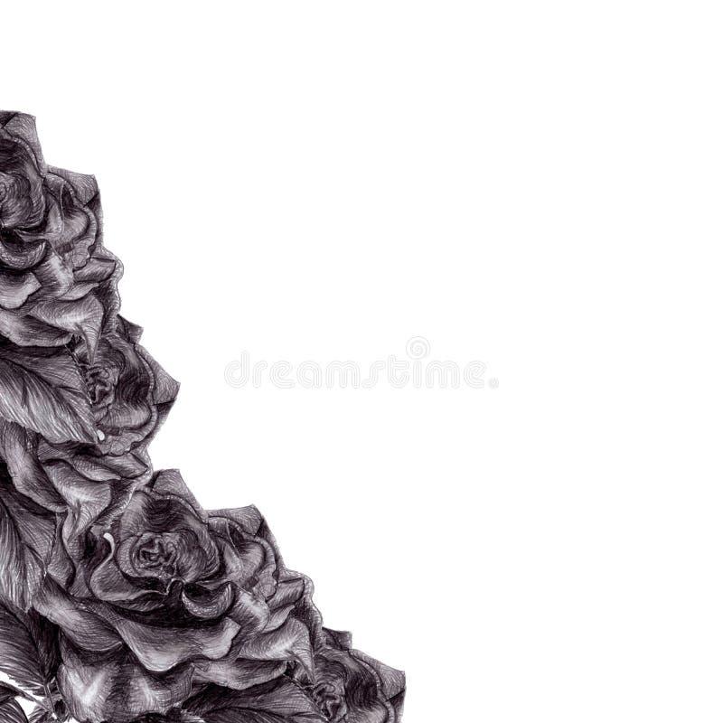 Ejemplo de la rosa blanco y negro libre illustration