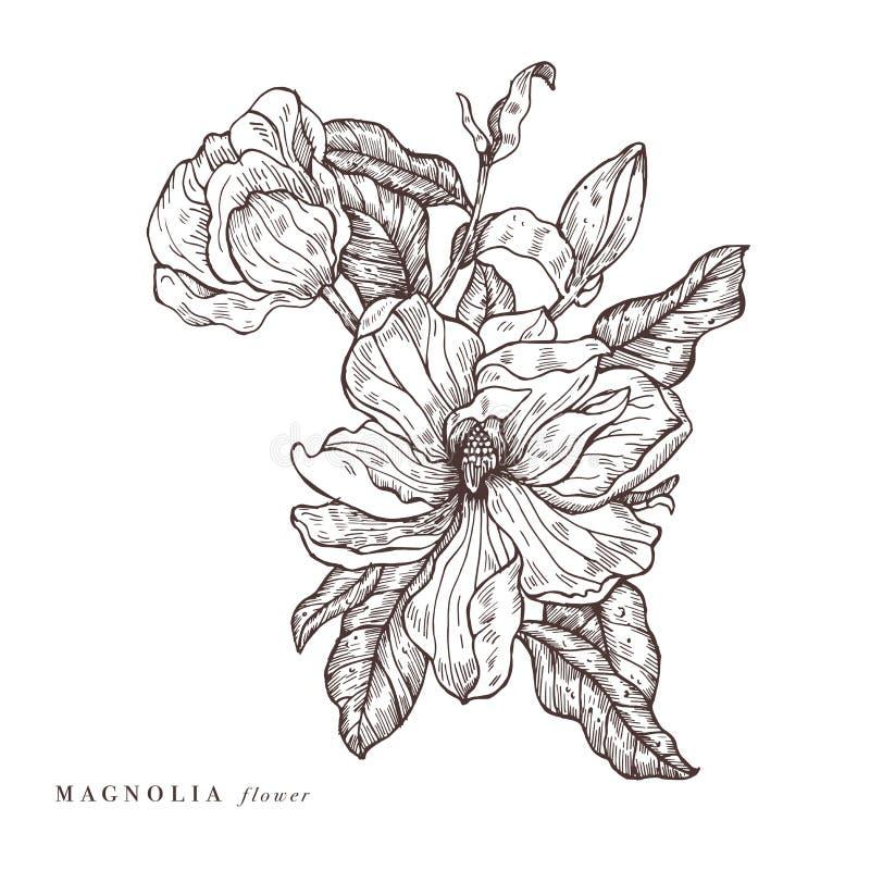 Ejemplo de las flores de la magnolia del vector del drenaje de la mano Guirnalda floral Tarjeta floral botánica en el fondo blanc stock de ilustración