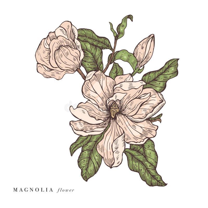 Ejemplo de las flores de la magnolia del vector del drenaje de la mano Guirnalda floral Tarjeta floral bot?nica en el fondo blanc libre illustration