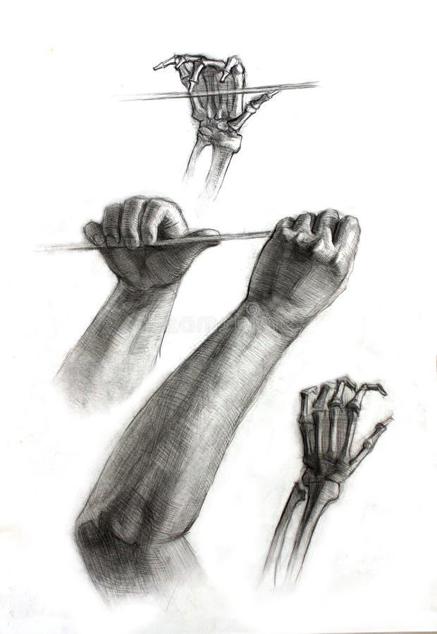 Ejemplo de las manos académicas del dibujo del ser humano en el fondo blanco libre illustration