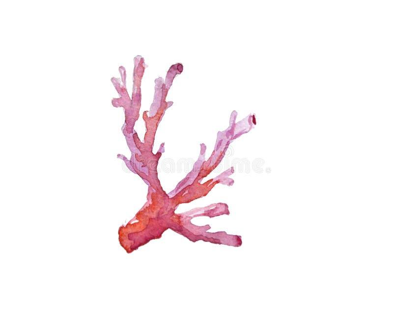 Ejemplo de los corales de la acuarela Diseño de la acuarela stock de ilustración
