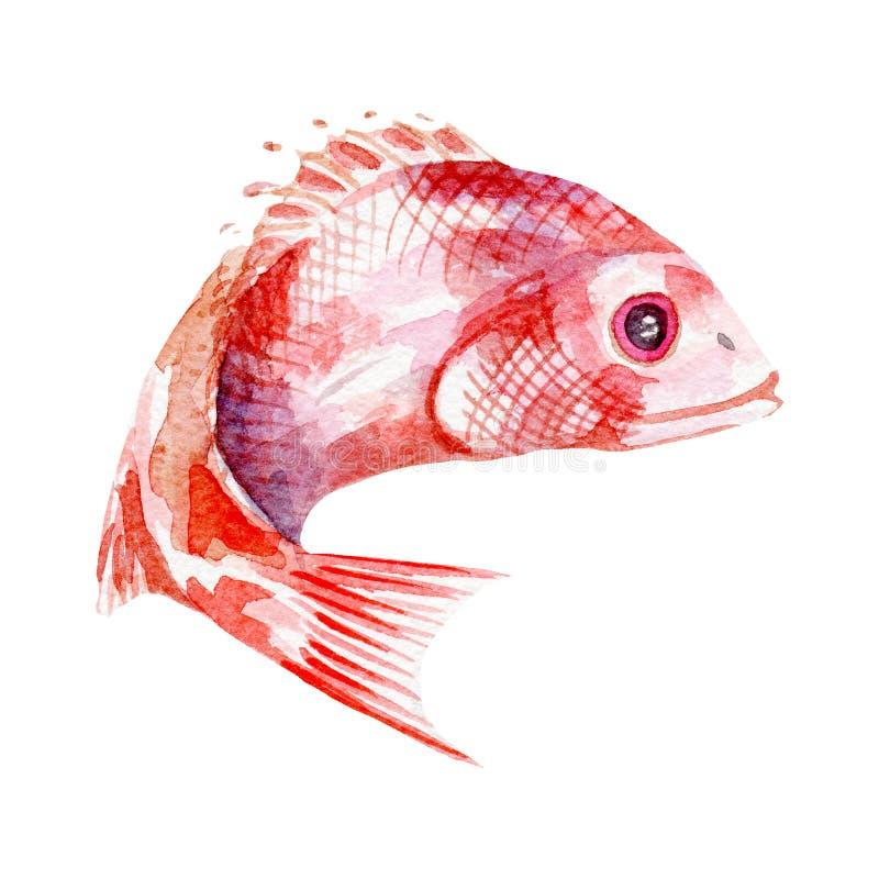 Ejemplo de los pescados frescos Acuarela dibujada mano en el fondo blanco ilustración del vector