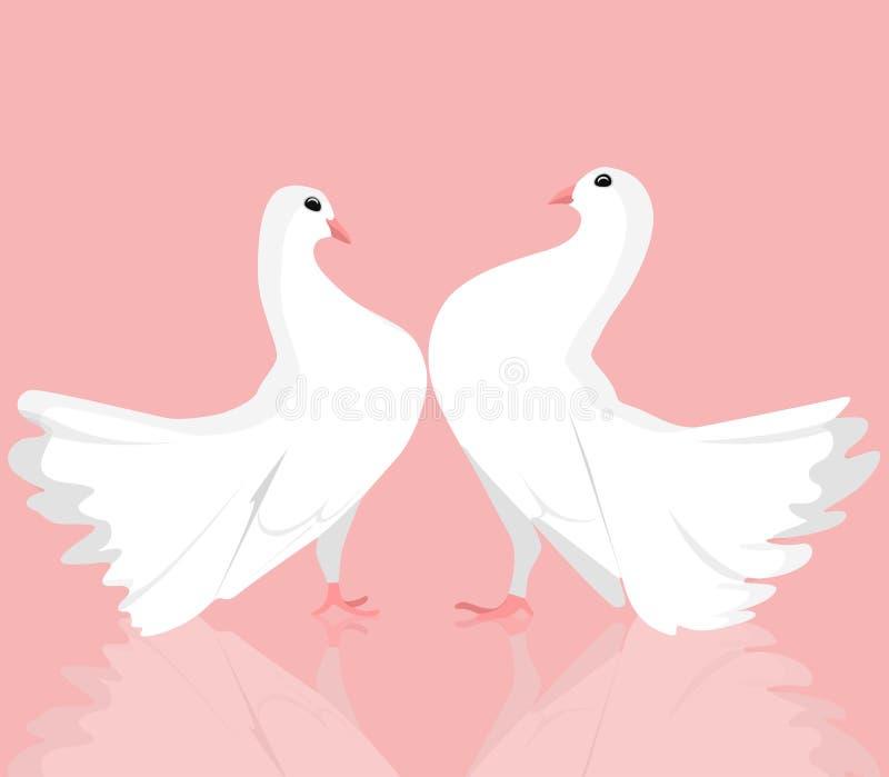 Ejemplo de pares de palomas blancas ilustración del vector