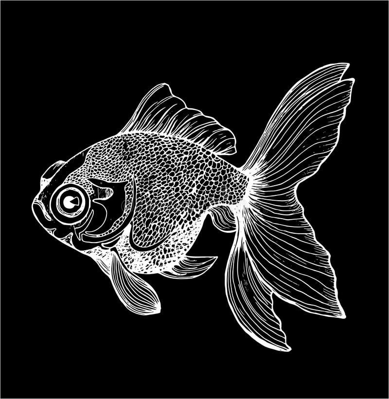Ejemplo de un pescado Dibujo blanco y negro de la carpa Tiza en una pizarra stock de ilustración