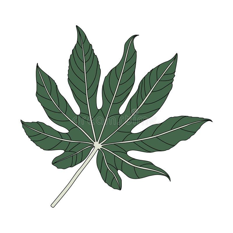 Ejemplo de una hoja de la aralia stock de ilustración