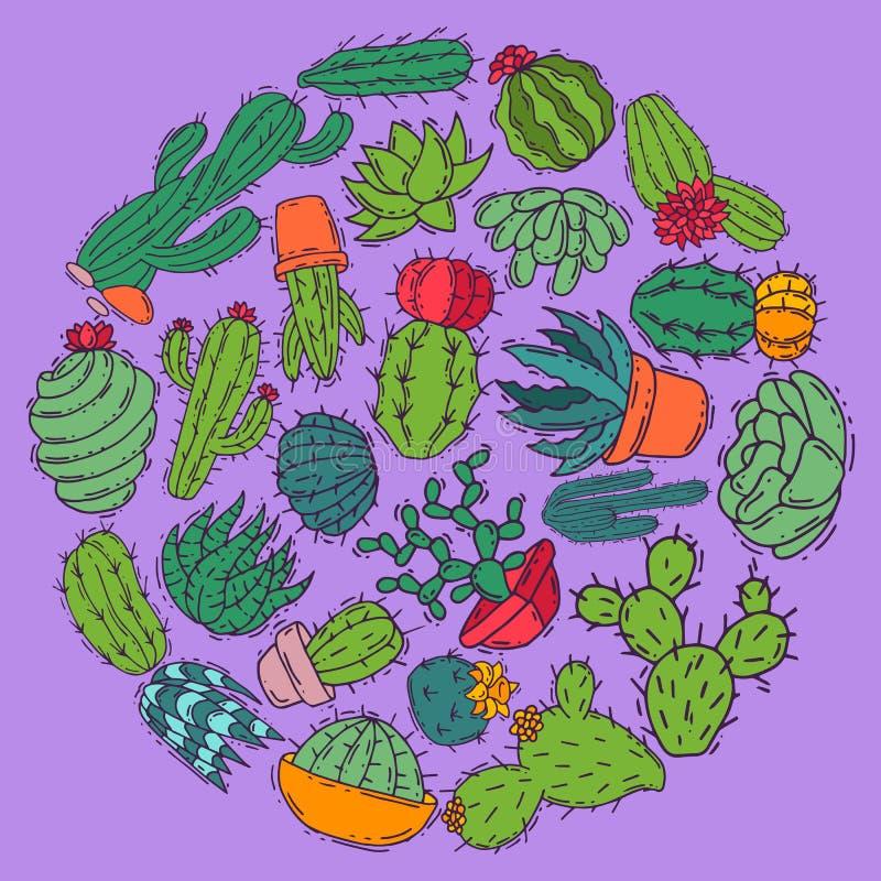 Ejemplo decorativo del vector de las plantas verdes de los cactus de los Succulents Bandera floral del houseplant botánico de la  ilustración del vector