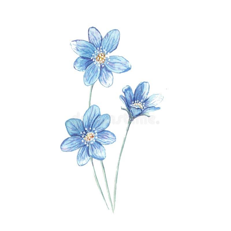 Ejemplo del azul de la flor fotografía de archivo
