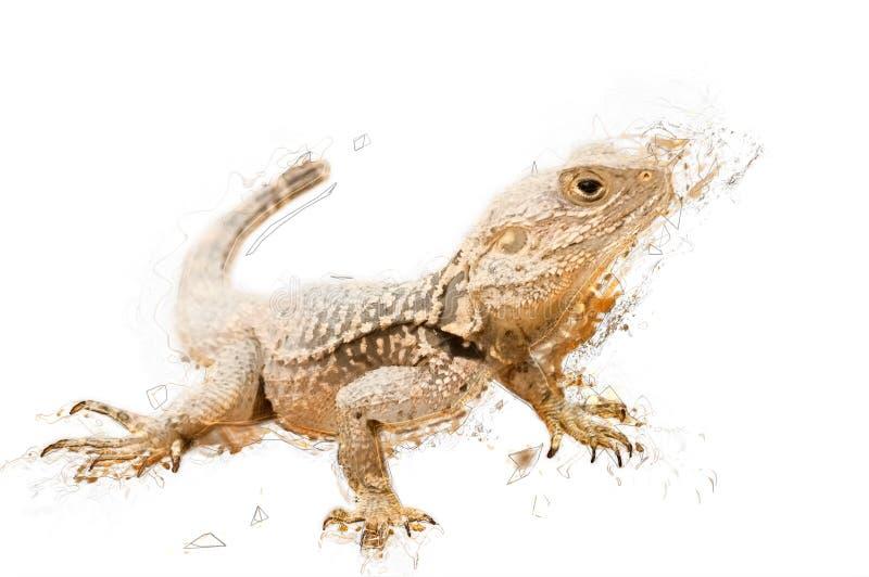 Ejemplo del bosquejo de un lagarto Aislado Contiene la palmadita del recortes ilustración del vector