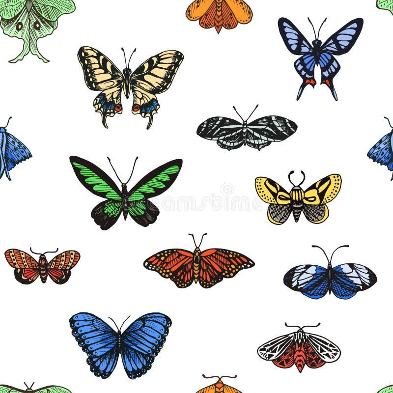 Ejemplo del bosquejo de una mariposa del vector Ornamento con las mariposas stock de ilustración
