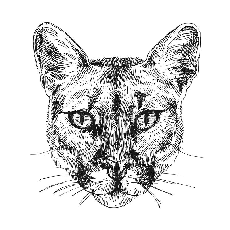 Ejemplo del bosquejo del puma stock de ilustración