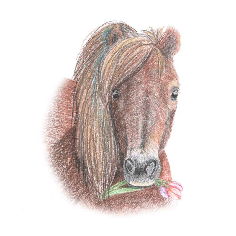 Ejemplo del caballo de los lápices de la acuarela foto de archivo