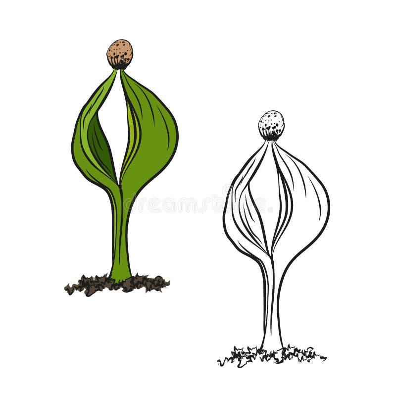 Ejemplo del contorno de la germinaci?n del aspecto de la primavera de la planta de las semillas libre illustration