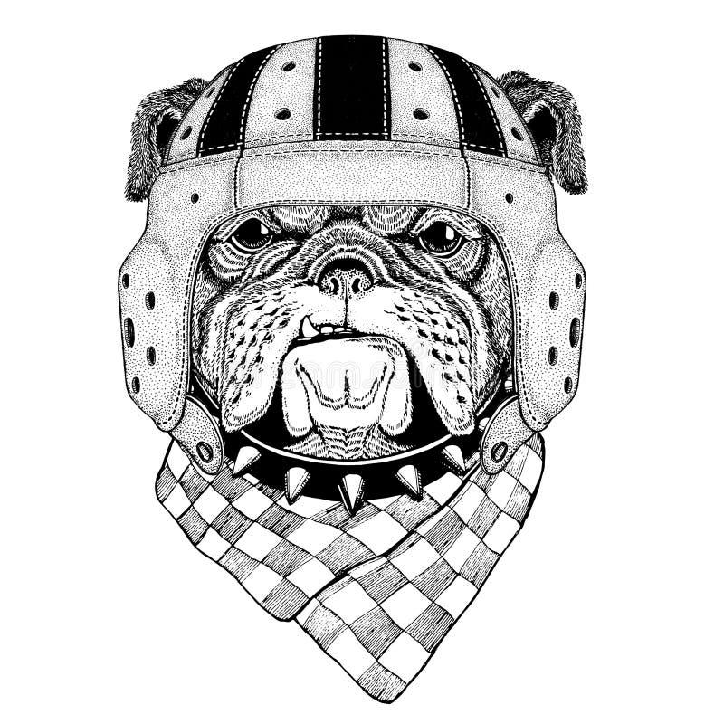 Ejemplo del deporte del casco del rugbi del animal salvaje del dogo que lleva stock de ilustración