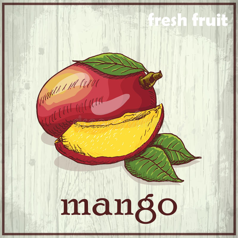 Ejemplo del dibujo de la mano del mango Fondo del bosquejo de la fruta fresca libre illustration