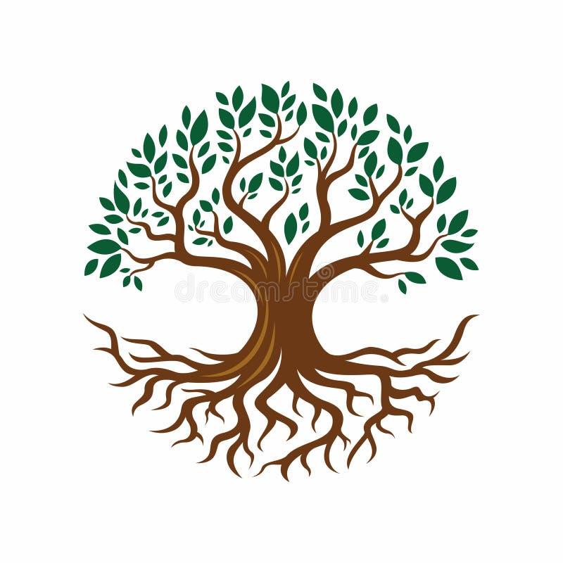 Ejemplo del diseño del árbol y de la raíz ilustración del vector