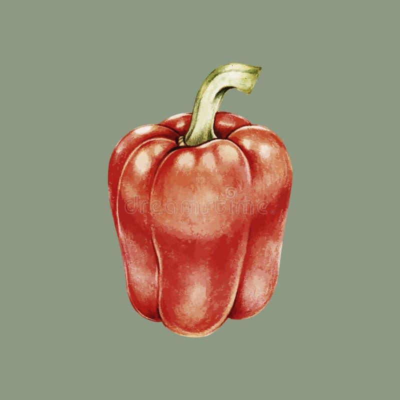 Ejemplo del estilo vegetal del dibujo del paprika stock de ilustración