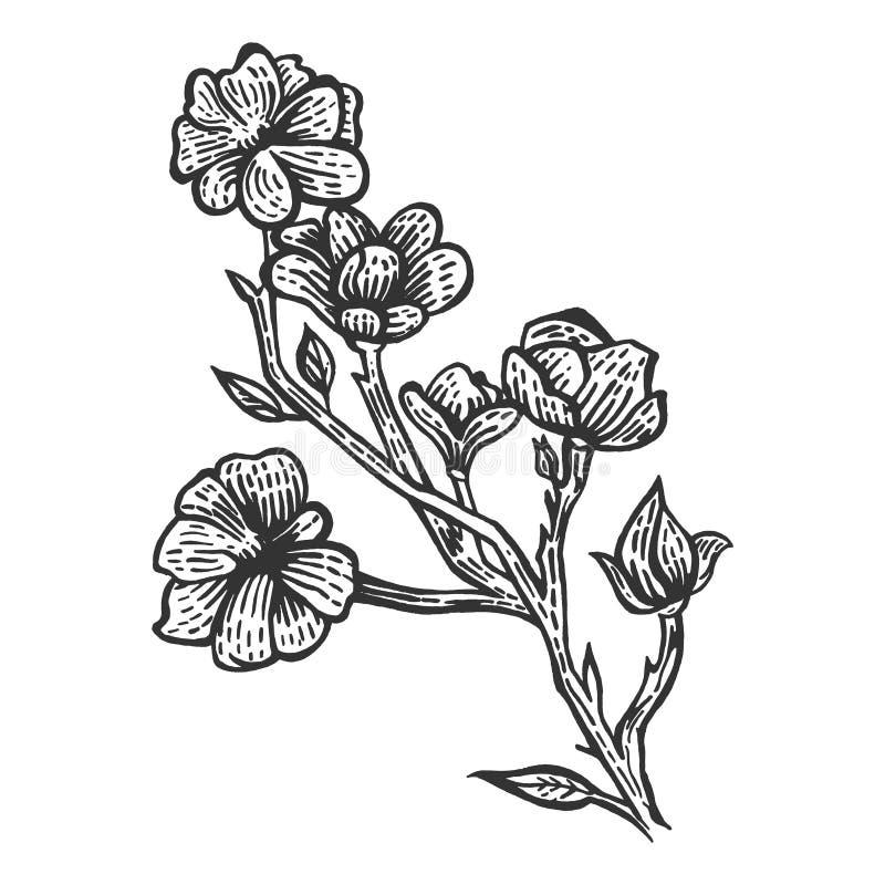 Ejemplo del grabado del bosquejo de la flor de la magnolia stock de ilustración