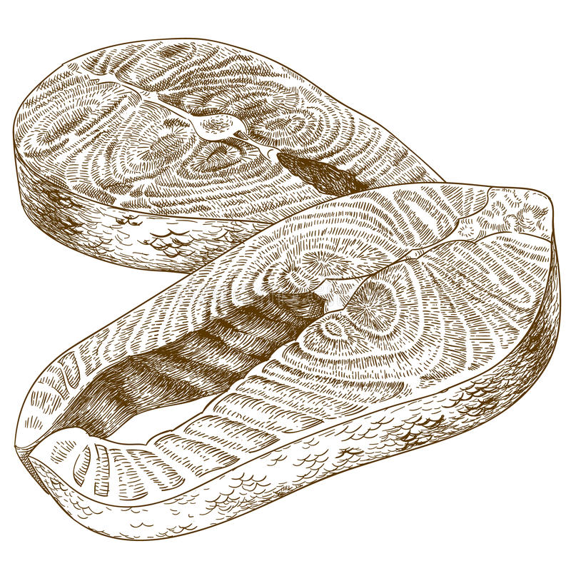 Ejemplo del grabado del filete de la trucha libre illustration