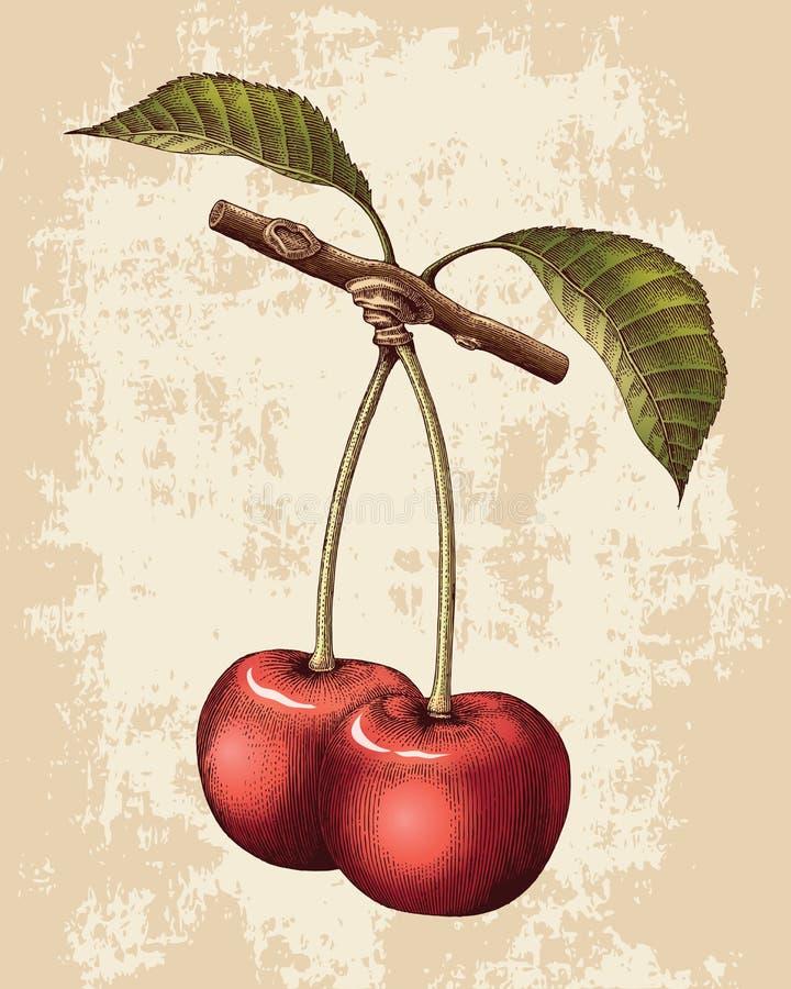 Ejemplo del grabado del vintage del dibujo de la mano de la cereza ilustración del vector