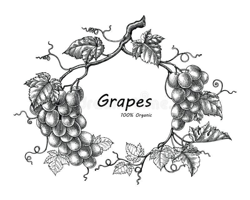 Ejemplo del grabado del vintage del dibujo de la mano del marco de las uvas libre illustration