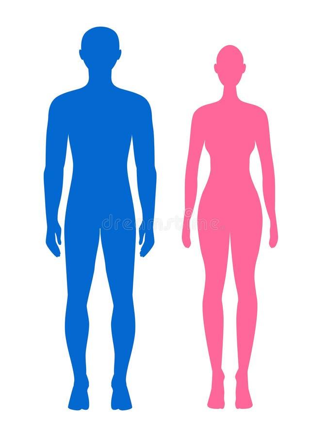 Ejemplo del hombre y de la mujer Silhouet azul y rosado de la anatomía stock de ilustración
