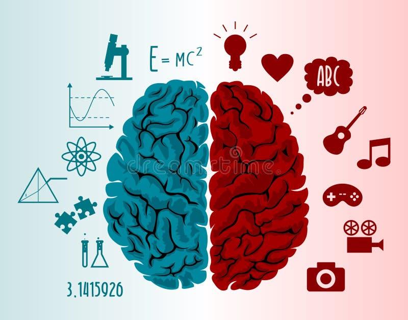 Ejemplo del infographics del cerebro stock de ilustración