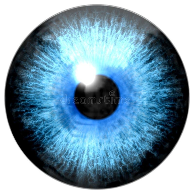 Ejemplo del iris azul claro del ojo, reflejo de luz ilustración del vector