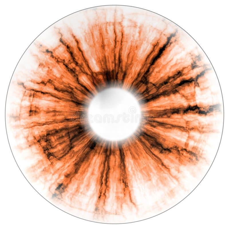 Ejemplo del ojo negativo, iris anaranjado, reflejo de luz Tamaño medio de ojos stock de ilustración