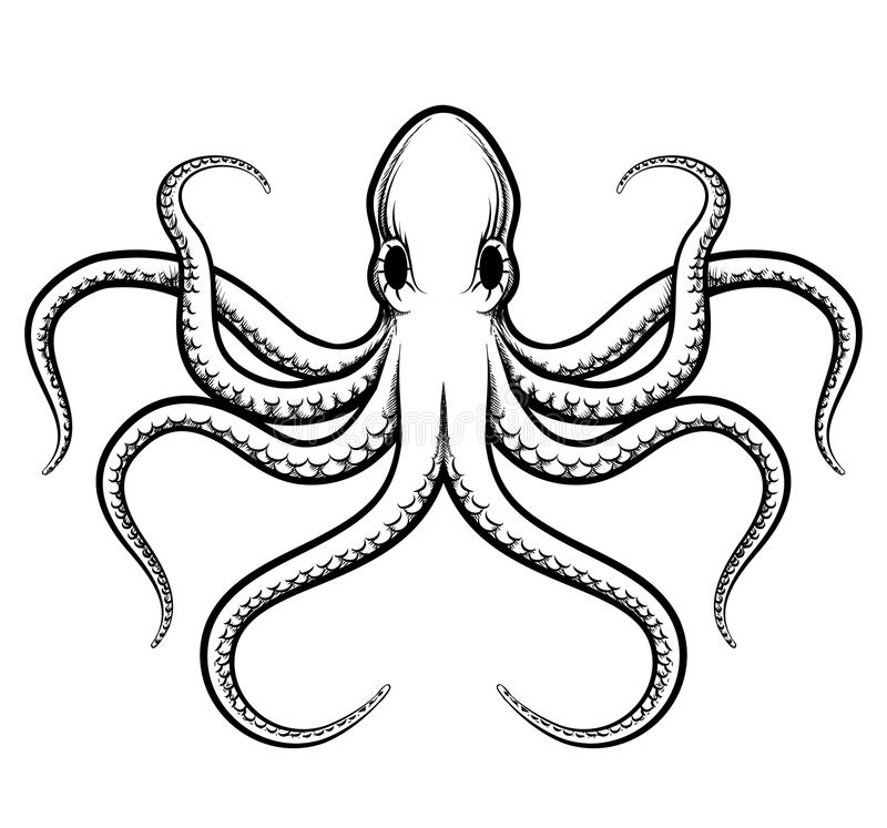 Ejemplo del pulpo del vector stock de ilustración