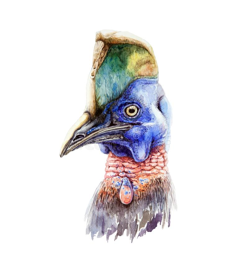 Ejemplo del retrato del casuario de la acuarela Pájaro australiano exhausto de la fauna de la mano, aislado en el fondo blanco ilustración del vector
