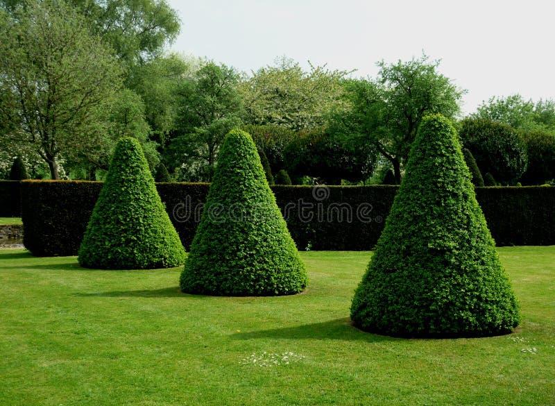Ejemplo del topiary que forma formas abstractas foto de archivo